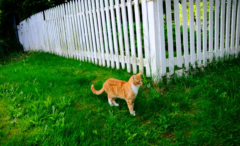 - How To Keep Cats Off Your Lawn With Deep Learning NVIDIA Blog