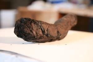 The Herculaneum scrolls, wound about 100 times around, are sealed by the heat of the lava.
