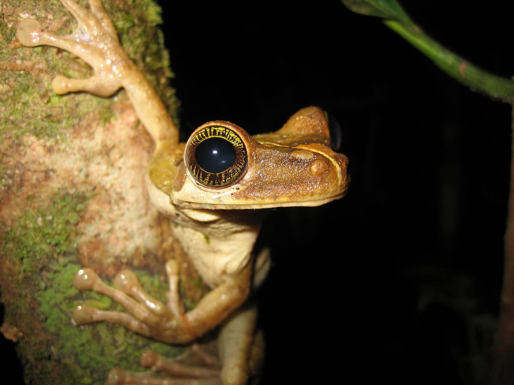 The Amazon is home to more species of plants and animals (including this tree frog) than any other terrestrial ecosystem.