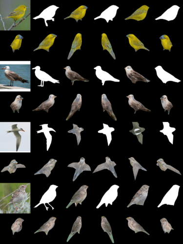 The team tested DIB-R on four 2D images of birds (far left). The first experiment used a picture of a yellow warbler (top left) and produced a 3D object (top two rows).
